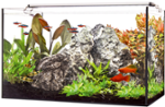 LED AQUARIUM 60