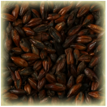 Roasted Barley Castle Malting